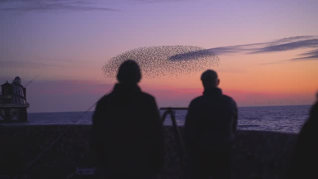 starlings grouping together before roosting at sunset - horizon over water stock videos & royalty-free footage