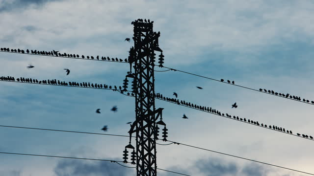 starlings on electric wire - high voltage stock videos & royalty-free footage