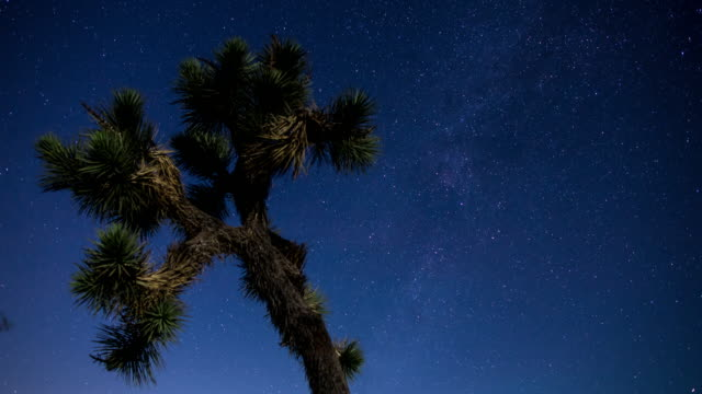 starry desert night at joshua tree - time lapse - joshua tree national park stock videos & royalty-free footage