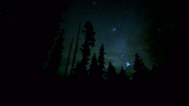 Starry night clouds dark sky and douglas fir tree dark silhouette in McKenzie Valley