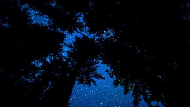 Starry Night in Redwood Forest