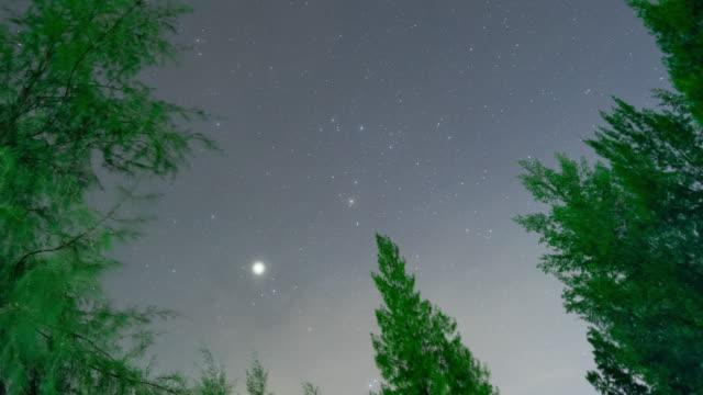 vídeos de stock, filmes e b-roll de céu estrelado sobre a floresta tropical, vídeo do lapso de tempo - distante