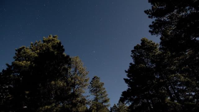 t/l ws la stars and clouds moving across sky over pine forest / flagstaff, arizona, usa - flagstaff arizona video stock e b–roll
