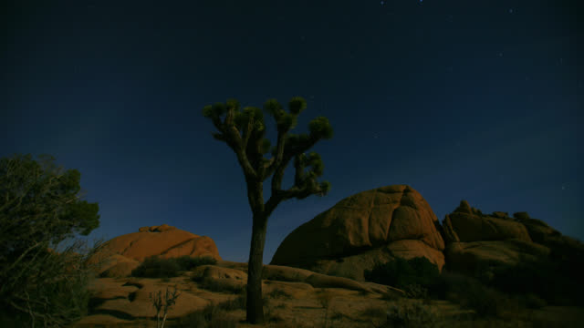 time lapse low angle wide shot stars move above lone joshua tree and rocks in joshua tree national park at night - albero di giosuè video stock e b–roll