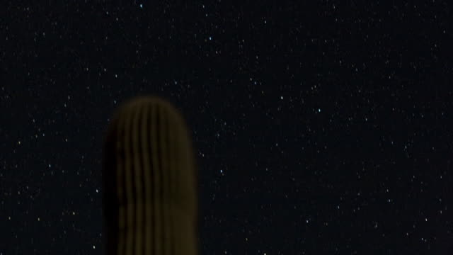 Stars move over a saguaro cactus at night. Available in HD.