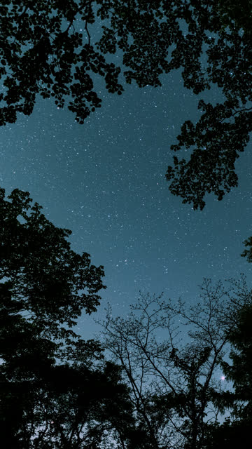 vídeos de stock, filmes e b-roll de stars moving in the night sky (vertical time lapse) - noite