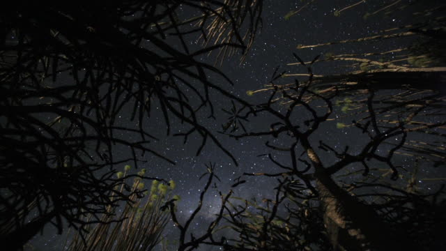 vídeos de stock, filmes e b-roll de t/l, cu, la, stars of milky way rotating over spiny forest (alluaudia procera), madagascar - silvestre