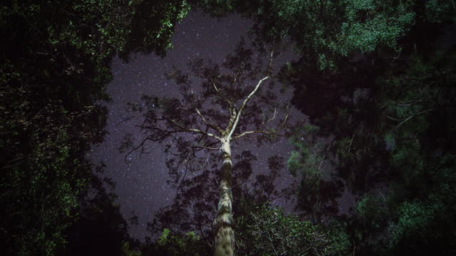 Stars passing over a tree in a clearing in the rain forest