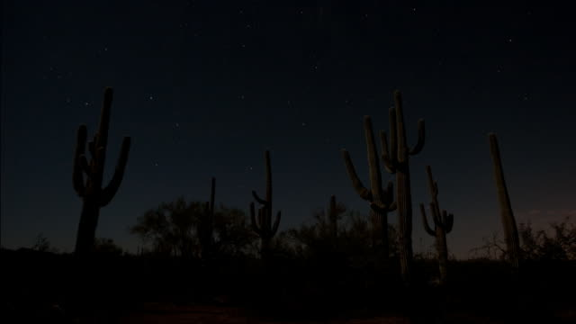 Stars shoot through night sky over saguaro cactus in the Sonoran desert. Available in HD.