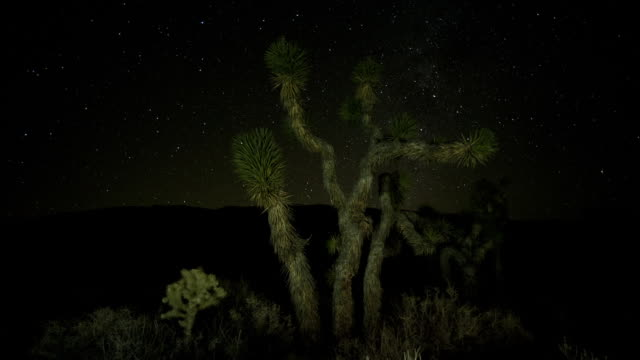 stars twinkle above joshua trees in the mojave desert. - death valley national park stock videos & royalty-free footage