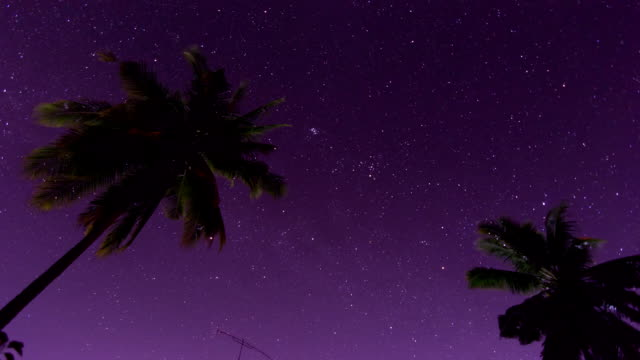 stars walk timelapse - palm tree stock videos & royalty-free footage