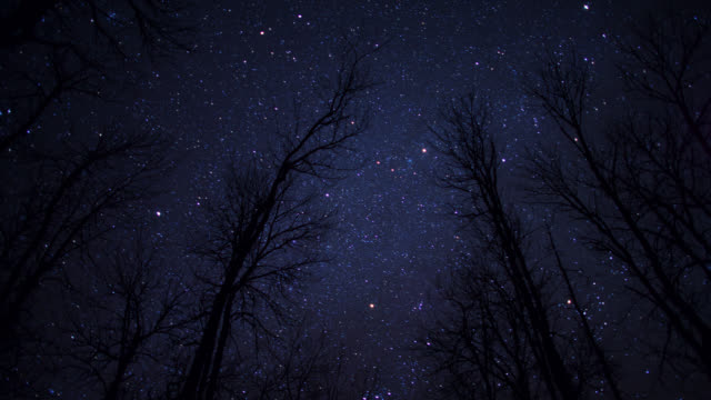 "tl stars wheal in night sky over trees, minnesota, usa - ""bbc natural history"" video stock e b–roll"