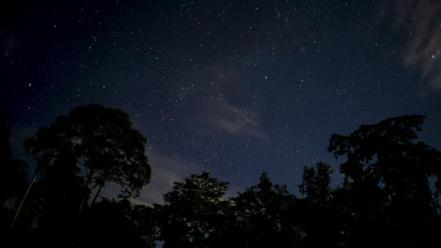 stars wheel over trees, malaysia. - malaysia stock videos & royalty-free footage