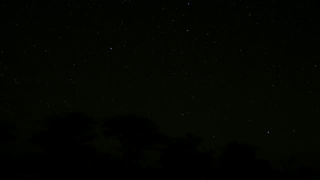 Stars wheel over trees.