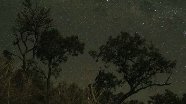 stars wheel over trees. - atmosphere filter stock videos & royalty-free footage