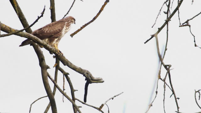 start - hawk bird stock videos & royalty-free footage