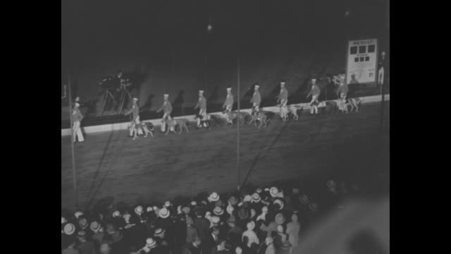 ls starting gate at dog racetrack crowd under lights in stands dogs tear out of the gate and begin the race / ls high angle of groomers parading dogs... - starting gate stock videos and b-roll footage