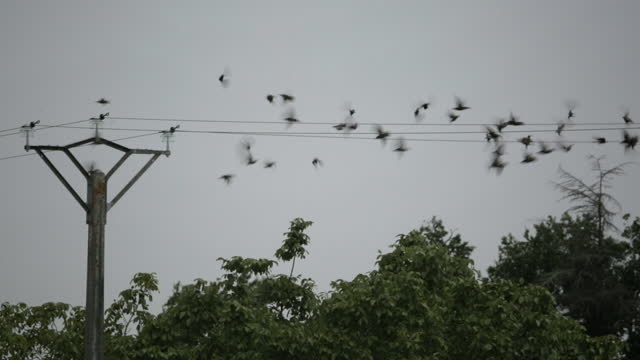 startled birds fly off a telegraph line - cable stock videos & royalty-free footage
