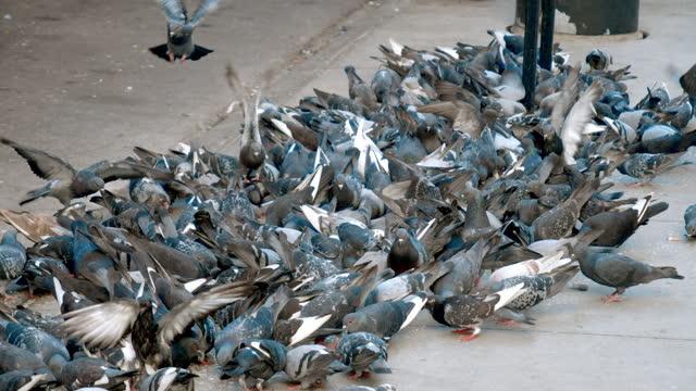 vídeos de stock, filmes e b-roll de state / lake subway station, pigeons - metrô de chicago