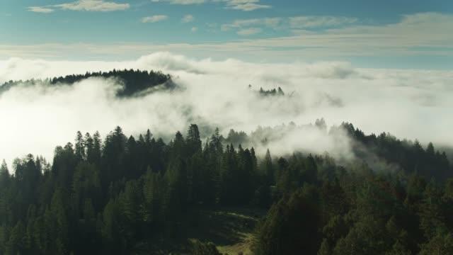 vídeos de stock, filmes e b-roll de antena de estática da névoa da manhã que funde sobre redwoods - sequoia sempervirens