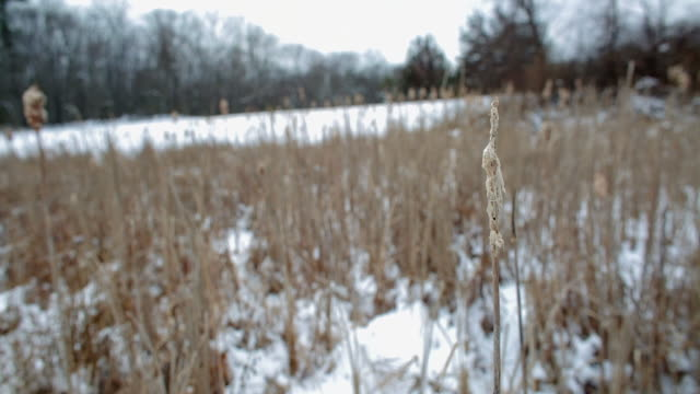 static close up of a cat tail moving in wind, shallow focus, winter landscape background - アルスター郡点の映像素材/bロール