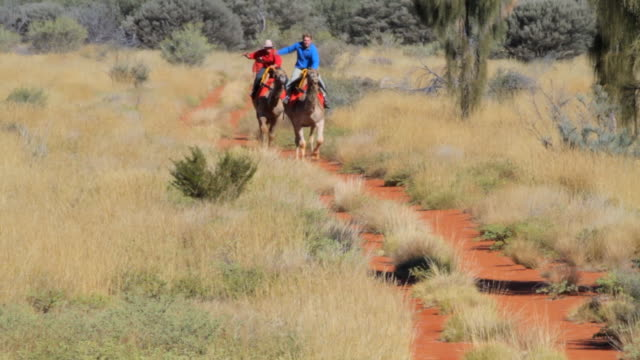 ms ts static man and woman racing camels / northern territory, australia - wiese stock videos & royalty-free footage