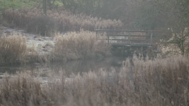 static shot of a pond with a wooden bridge in wharram percy - reed grass family stock videos & royalty-free footage