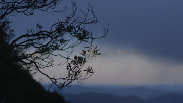 Static shot of a spindly, silhouetted plant in the Blue Mountains, New South Wales, Australia.