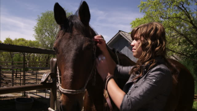 a static shot of a woman adjusting a horse's bridle. - bridle stock videos & royalty-free footage