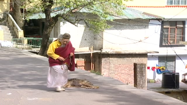 static shot of an elderly buddhist man and a motorcyclist passing a sleeping dog sleeping on a street. thousands of tibetan exiles live in dharamsala. - long hair stock videos & royalty-free footage