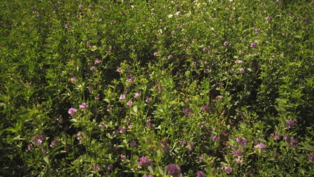 static shot of butterfly and purple flower bushes. - プロボ点の映像素材/bロール