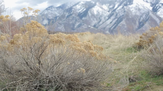 vídeos de stock, filmes e b-roll de static shot of dry grasses in foreground with mountains surrounding salt lake city in background, at dimpledell park, utah - park city utah