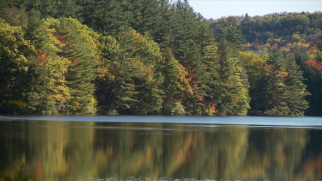 Static Shot Of Fall Trees In A Lake