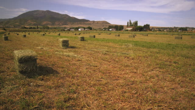 static shot of farm with bails of hay. - hay background stock videos & royalty-free footage