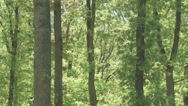 static shot of green trees in german nature preserve - germany stock videos & royalty-free footage