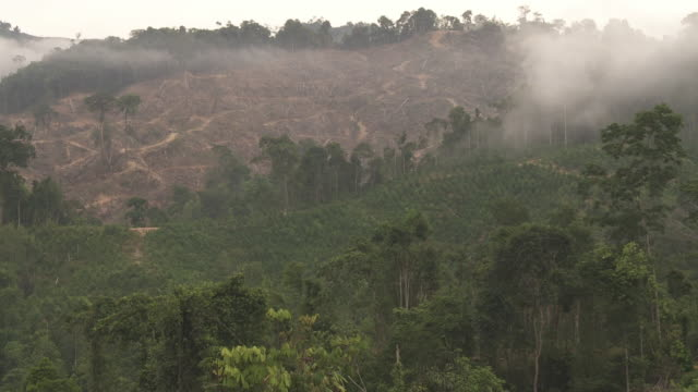 static shot of logged forest with new plantation nearby - island of borneo stock videos and b-roll footage