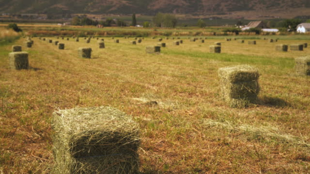 static shot of rows of bails of hay. - プロボ点の映像素材/bロール