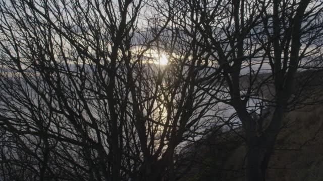 vídeos de stock, filmes e b-roll de static shot of sunset seen through tree branches at the scarborough bay - scarborough norte de yorkshire