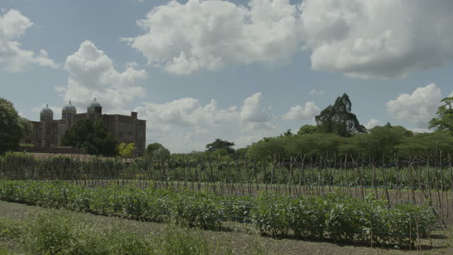 static shot of the kitchen garden in front of doddington hall - botany stock videos & royalty-free footage