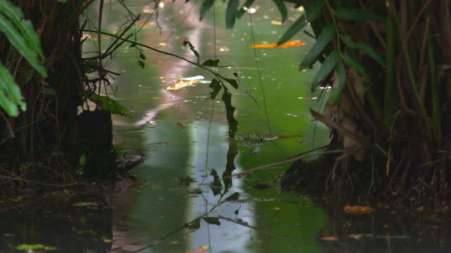 stockvideo's en b-roll-footage met static shot of water and vegetation in botanical garden in rio. - 2013