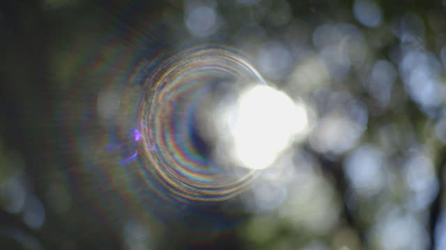 Static shot showing dappled light creating extreme lens flare through a forest tree canopy in New South Wales, Australia.