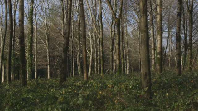 Static shot showing trees and scrub in a woodland area in the UK.
