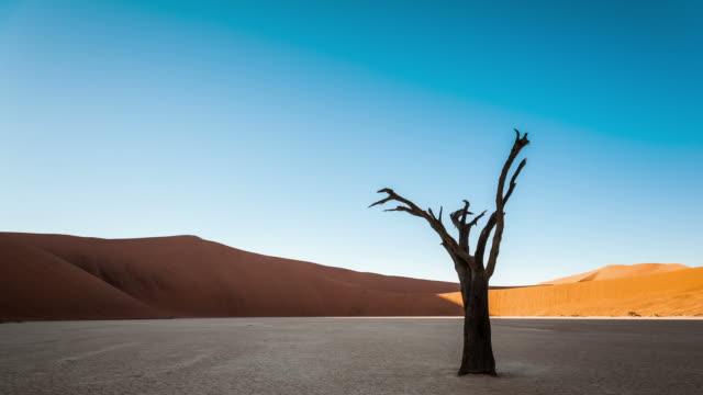 Static timelapse of a landscape scene in Deadvlei, Namibia with a solidified tree in a white clay pan as the sun rises over the red sand dunes