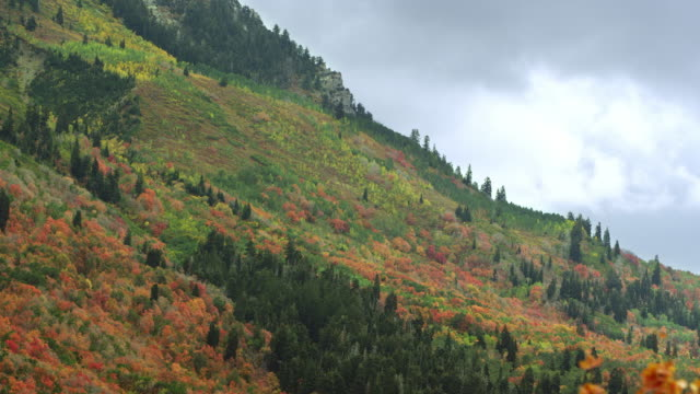 static view of colorful mountain side during fall - provo stock videos and b-roll footage