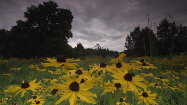 static wide landscape with yellow flowers - monoculture stock videos & royalty-free footage