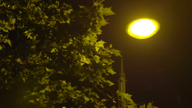 Static wide shot of a tree with a glowing streetlight in the background surrounded by moths in Paris, France
