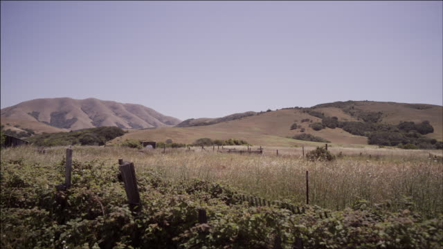 Static wide shot, tall grass, rolling hills, Northern California, beautiful Spring day