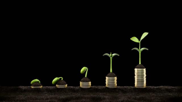 vídeos y material grabado en eventos de stock de concepto estadístico. crecientes gráficos financieros de seedling creciendo. germinar frijol 4k. - seed