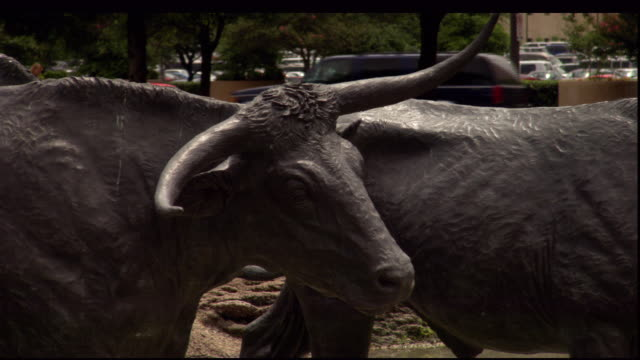 stockvideo's en b-roll-footage met a statue of a texas longhorn stands in a park. - texas longhorn