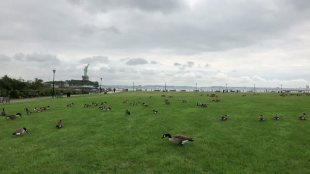 Statue of liberty and goose